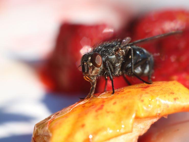 Com evitar les plagues durant l'estiu?