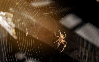 Tens problemes d'aranyes?